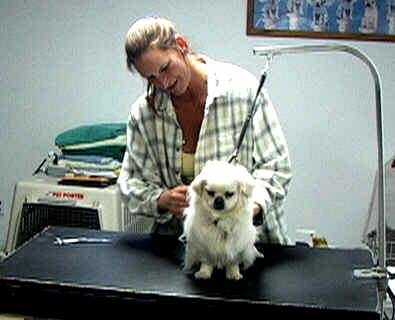 Paws denvers best pet groomer pat is the groomer who solutioingenieria Gallery